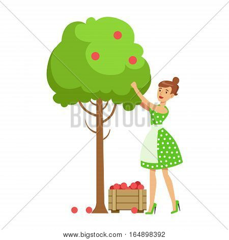 Woman Picking Organic Apples From A Tree , Contributing Into Environment Preservation By Using Eco-Friendly Ways Illustration. Part Of People And Ecology Series Of Vector Cartoon Drawings.