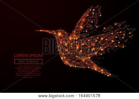 Abstract mash line and point colibri in flames style on dark background with an inscription. Business strategy of a starry sky or space, consisting of stars and the universe. Vector illustration