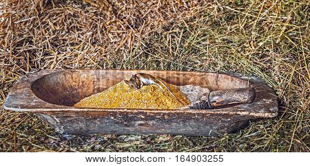 A dead mouse on top of a heap of corn ground in an old wooden trough with hay background.