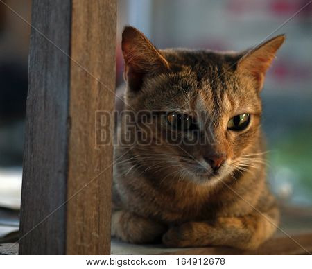 COLOR PHOTO OF TABBY CAT ON WOODEN CHAIR