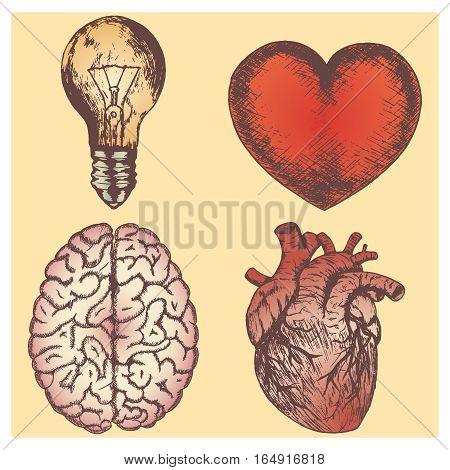 Hand drawn vector sketch illustration set - brain, love and naturalistic heart, light bulb.