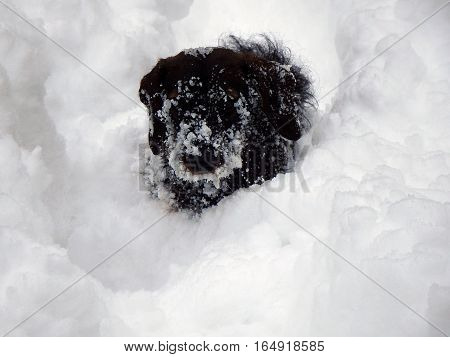 small dog and deep snow , winter country