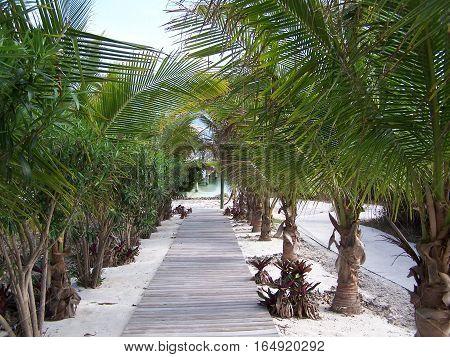 walk way, path, palm trees, water, beach, sand