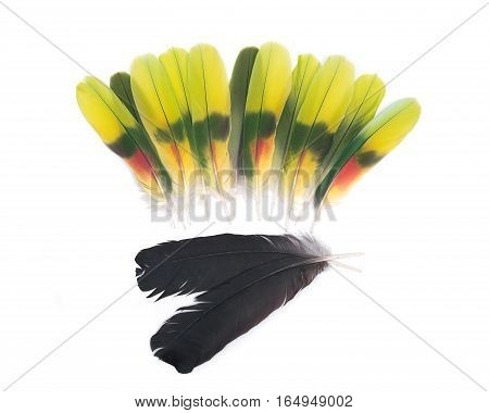 Two black raven feathers and colorful parrot feathers isolated on white background