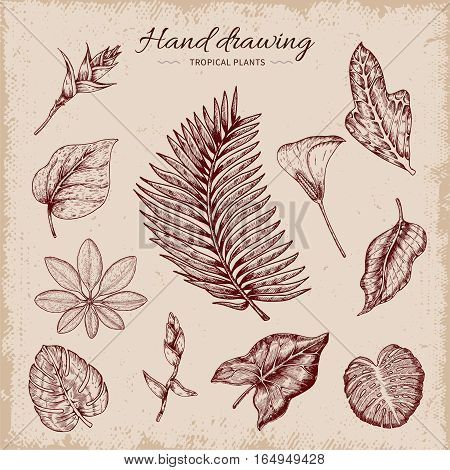 Tropical plants including monstera coconut palm frangipani plumeria on beige worn background hand drawn vector illustration
