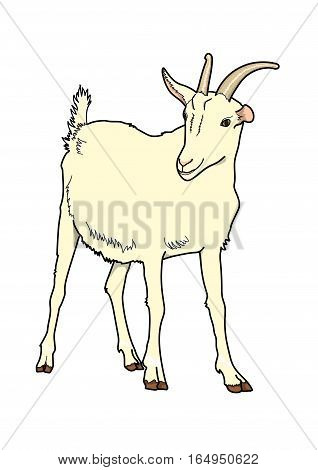 The  goat  milky on a white background.