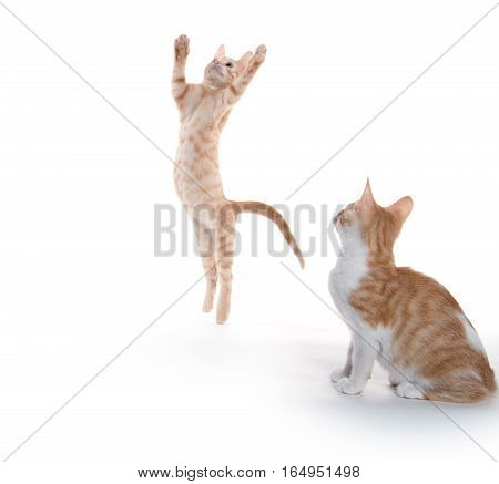 Cute Kittens Leaping And Playing