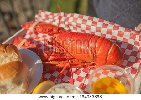 Close up of huge boiled lobster served with bun and butter. Lobster food festival
