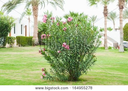 Park with shrubs and green lawns landscape design. Beautiful Garden with a Freshly Mowed Lawn Landscaping. Palm tree. Summer travel photo concept