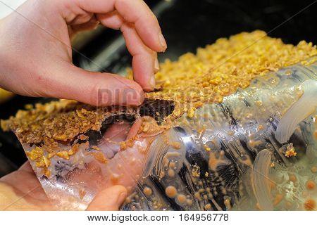 Picking round Cracker Crust off the plastic
