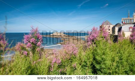 View through the flowers on Eventail beach and an island of National fort in Saint-Malo, Bretagne, France