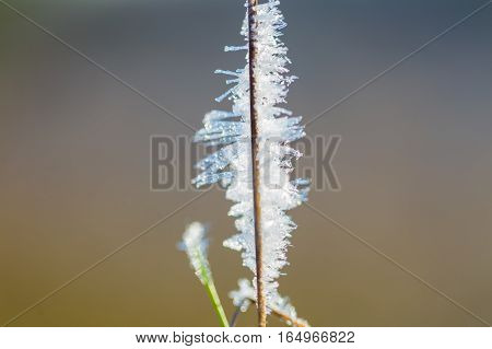 Close Up Of Rime On Plants.