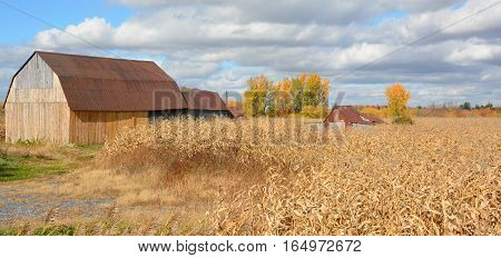 ANGE GARDIEN QUEBEC CANADA 10 19 2016: Old barn near corn field in fall season. Ange Gardien located within the Rouville Regional County Municipality in the province's Monteregie region