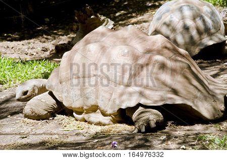 the tortoise is walking across the park