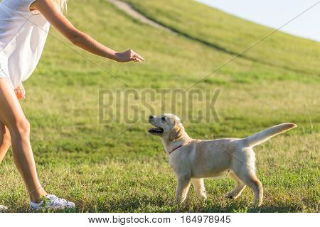 girl playing with her puppy in the park in spring