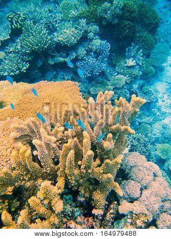 Coral Reef In Somosomo Strait Off The Coast Of Taveuni Island, Fiji