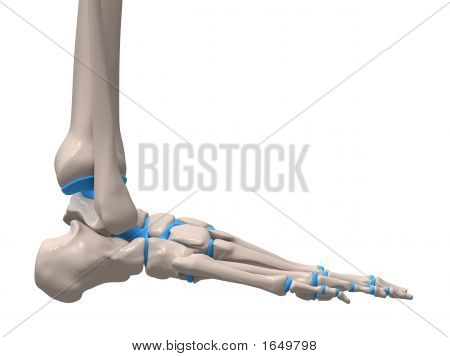 Human Foot Illustration