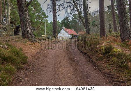 Derelict cottage near Loch An Eilein, Rothiemurchus, Scotland