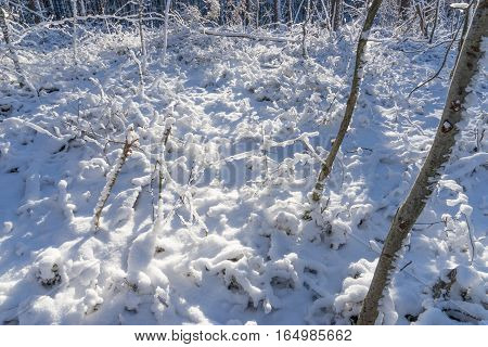 Snow covered forest floor on a sunny winter day