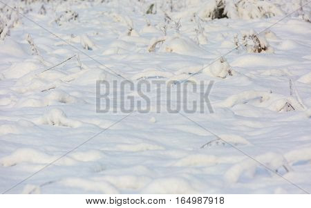 Plants Under Fresh Snow