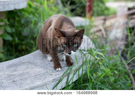 brown cat on the table in thailand