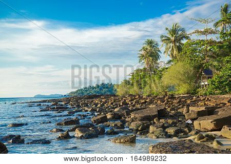 coast and coconut tree on island and beautiful sea