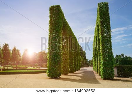 Beautiful garden with green hedges with trees alley green lawns.