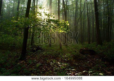 Sunbeam illuminating on the branch of the tree.