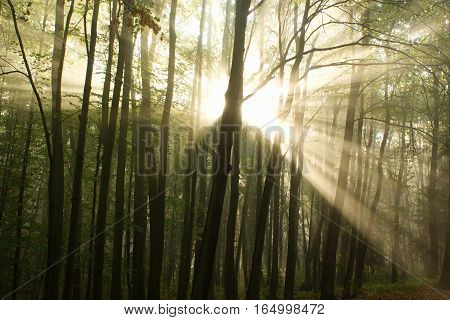 Photos of the moment of awakening of the deciduous forest.