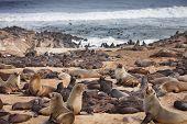 Atlantic seals poster