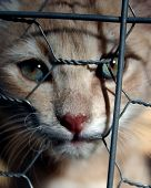 kitten in a cage is wanting someone to take her home. poster