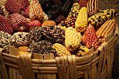 Coloured corn cobs in Peru poster