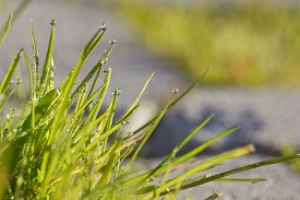 Closeup image of dew water drops in the grass.