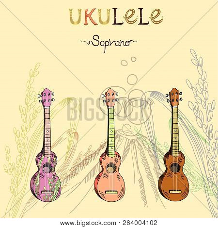 Vector Illustration With Traditional Hawaiian Guitar Ukulele Soprano In Three Different Versions: Wo