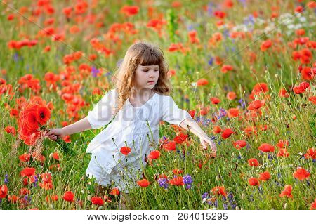 Adorable Little Girl In White Dress Playing In Poppy Flower Field. Child Picking Red Poppies. Toddle