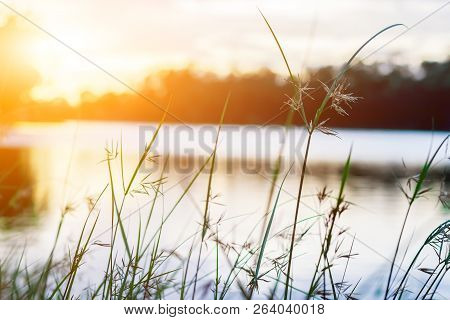 Flowers Grass Blurred Bokeh Background With The Lagoon And Sunset Is Beautiful.