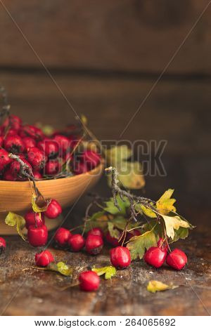 Autumn Harvest Hawthorn Berry With Leaves In Bowl On A Wooden Table Background. Copy Space. Dark Rus