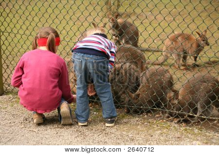 Two children feed Kangaroos in a zoo poster