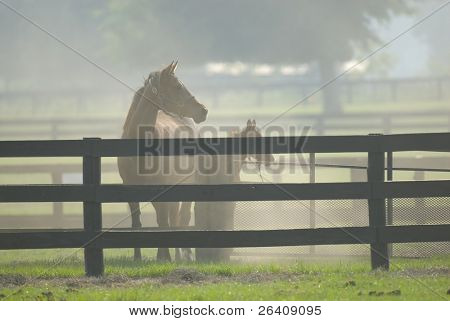 Baby and Mare Horse Equine poster