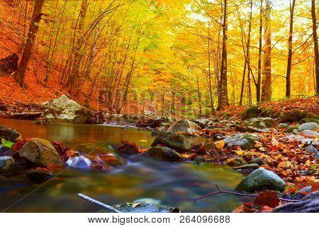 autumn stream in the forest, gold autumn European landscape