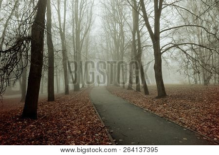 Fall nature - misty fall view of fall park alley in dense fog. Fall foggy landscape. Mysterious fall landscape scene