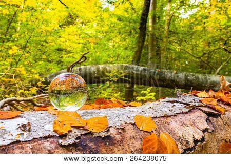 Crystal Ball On A Wooden Log In A Forest With Autumn Leaves In The Fall