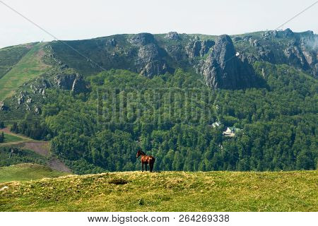 Nature Landscape With Wild Horse. Wild Horse In Nature Landscape. Mountain Landscape Nature. Mountai