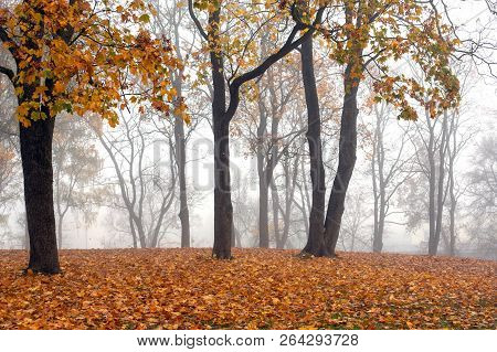 View Of Misty Gray Morning In Autumn Park With Fallen Leaves