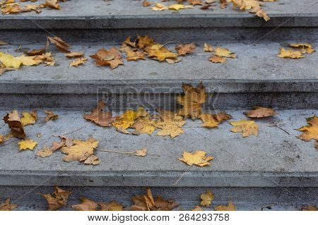 Stone Steps Fallen Leaves In October Autumn Park Background