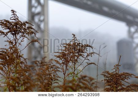 Brown Withering Autumn Grass Misty Urban Industrial Landscape