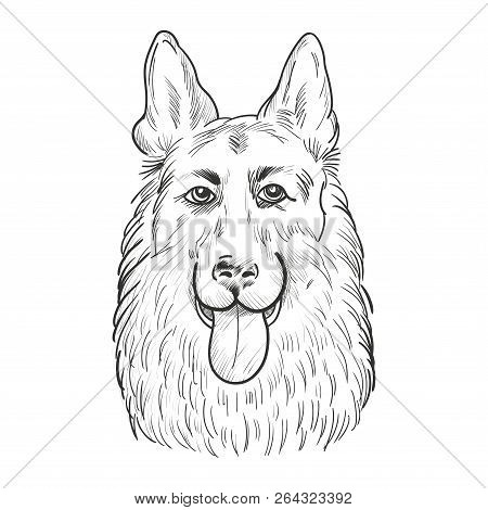 German Shepherd Dog Face Isolated On White Background. Working Dog Head Hand Drawn Sketch.