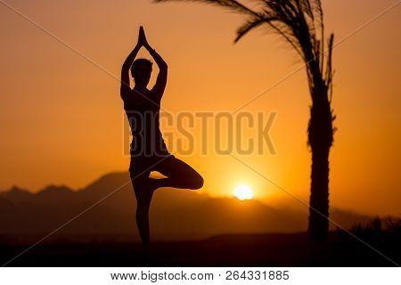 Back View Of Young Woman Doing Fitness, Yoga Or Pilates Training, Standing In Asana Vrikshasana (tre
