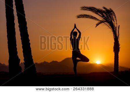 Silhouette Of Young Woman Doing Fitness, Yoga Or Pilates Training, Standing In Asana Vrikshasana (tr