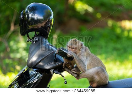 Funny monkey sitting on a motorbike and looking himself in the mirror